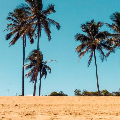 Tout savoir et comprendre sur le rhum AOC Martinique